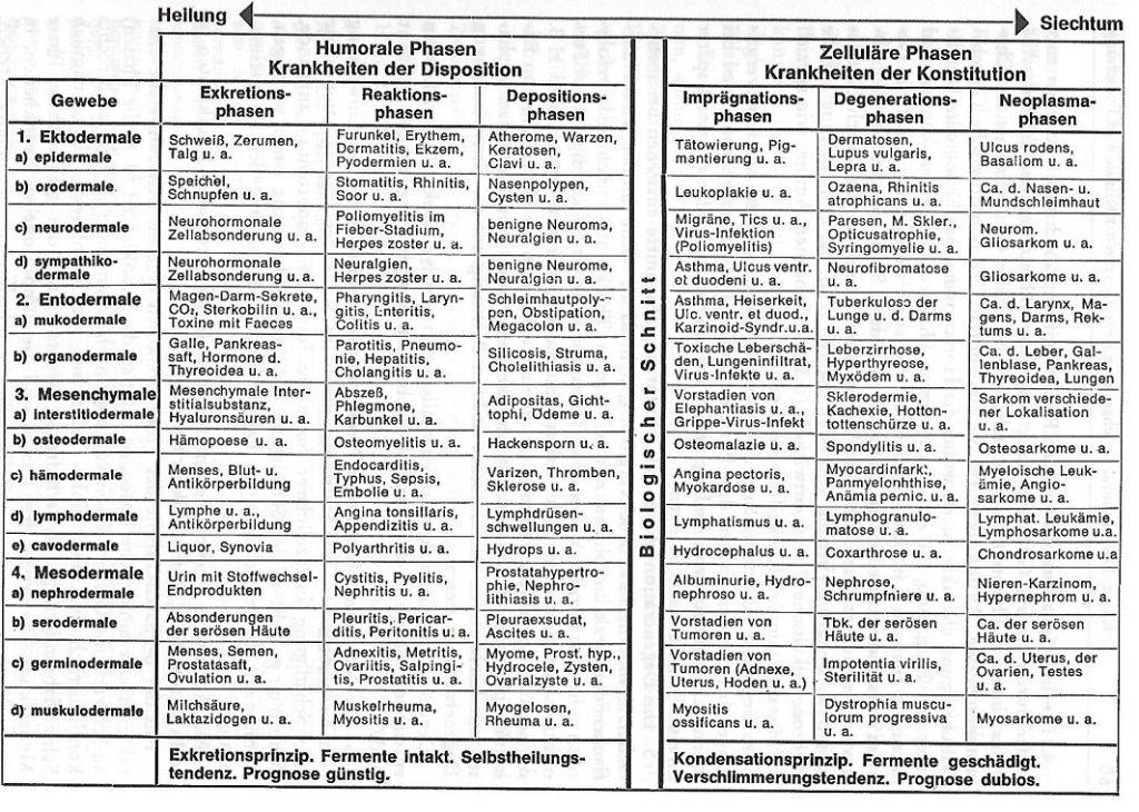 Die 6 Phasen Tabelle nach Dr. Reckeweg