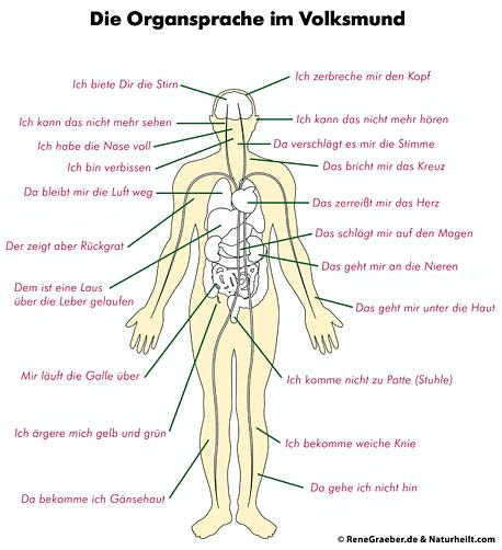 Organsprache des Körpers - Sprichwörter und wie sich diese auf den Körper auswirken